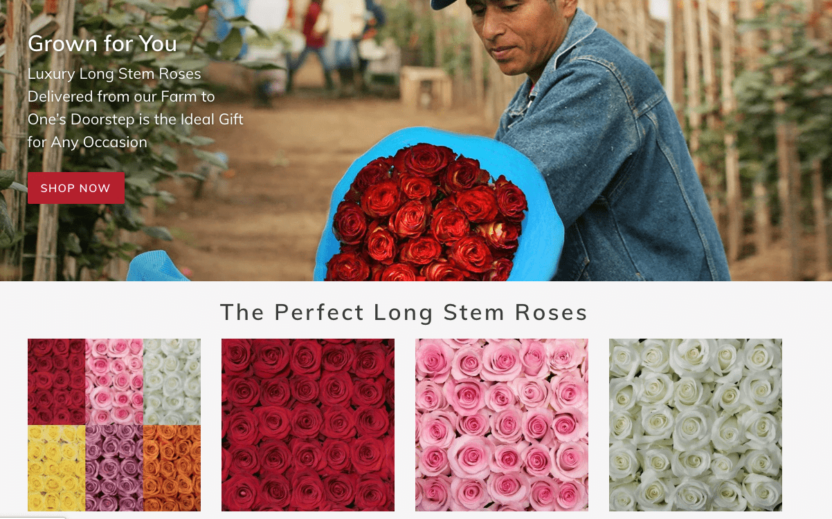 Rose Farmers