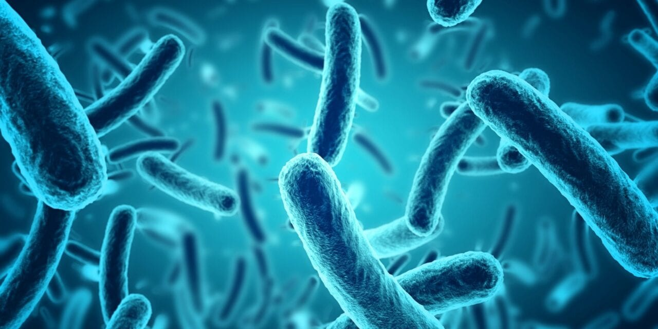 Could the germs in your gut help you lose more weight?. close up of 3d microscopic blue bacteria