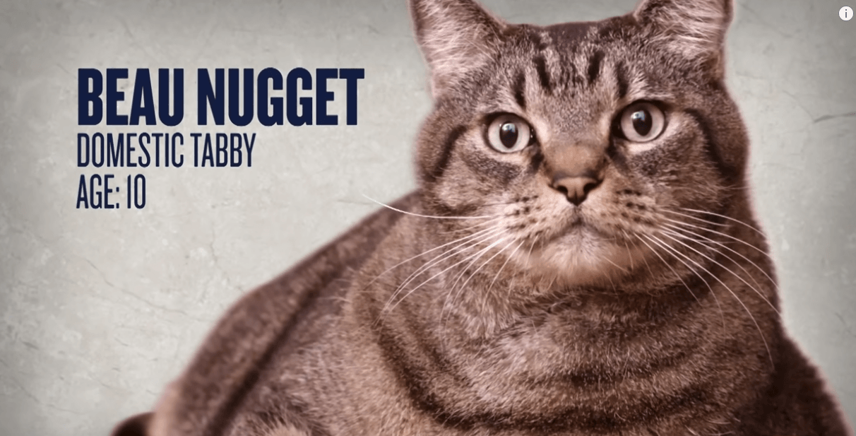 mybiglife-weight-loss-journey-videos-fat-cat-diet-beau-nugget